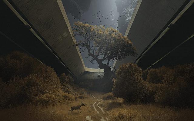 The Path (c) M. Karcz